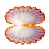 Le concept de la coquille de coque ouverte avec la perle est sur le blanc Photographie stock