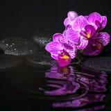 Le concept de station thermale de belles branches a dépouillé l'orchidée lilas Photographie stock libre de droits