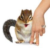 Le concept des soins des animaux, écureuil étreint la main humaine Photo libre de droits