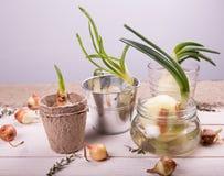 Le concept du jardinage de passe-temps Image stock