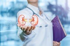 Le concept est le traitement d'organes internes dans la médecine moderne image stock