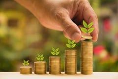 Le concept et la main d'argent d'économie mettant la pièce de monnaie d'argent empilent l'élevage Images libres de droits