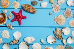 Le conchiglie incorniciano su fondo di legno blu Fotografia Stock Libera da Diritti