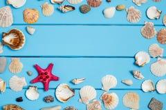 Le conchiglie incorniciano su fondo di legno blu Immagine Stock