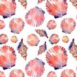 Le conchiglie variopinte e le stelle marine della bella dell'estate spiaggia marina fresca meravigliosa adorabile grafica luminos Fotografie Stock Libere da Diritti
