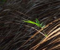 Le congé vert Photo stock