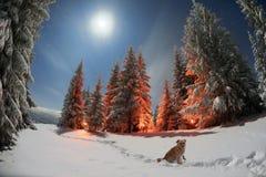 Le conte de l'hiver Photo stock