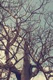 Le contour des branches d'un arbre mort sec contre un ciel bleu photo stock