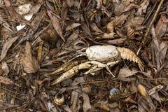 Le coperture del mollusco e del gambero di fiume si trovano sulle foglie e sulla sabbia in primavera della struttura del fondo de Fotografia Stock Libera da Diritti
