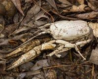 Le coperture del mollusco e del gambero di fiume si trovano sulle foglie e sulla sabbia in primavera della struttura del fondo de Immagini Stock Libere da Diritti