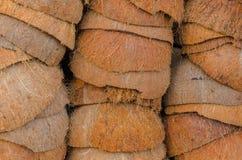 Le coperture della noce di cocco Fotografia Stock
