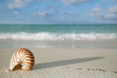 Le coperture di nautilus sulla sabbia bianca della spiaggia, contro il mare ondeggiano Fotografia Stock Libera da Diritti