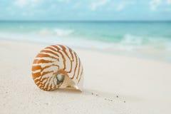 Le coperture di nautilus sulla sabbia bianca della spiaggia, contro il mare ondeggiano Immagini Stock