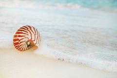 Le coperture di nautilus sulla sabbia bianca della spiaggia, contro il mare ondeggiano Immagine Stock Libera da Diritti
