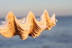 Le coperture ed il tramonto Fotografie Stock Libere da Diritti