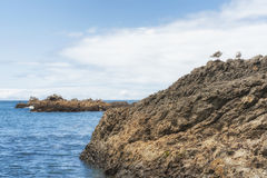 le Copie-espace des joints et des oiseaux sur les roches intertidales Photo stock
