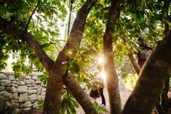 Le coppie baciano sotto l'albero Immagini Stock Libere da Diritti