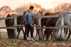 Le coppie nell'amore godono del giorno nella natura ed in cavalli immagine stock libera da diritti