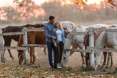 Le coppie nell'amore godono del giorno nella natura ed in cavalli fotografia stock