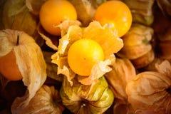 le coqueret comestible, portent des fruits or de légume d'aliment biologique de coqueret comestible image libre de droits