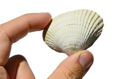 Le coquillage bivalve des molluscums de mollusque bivalve s'est tenu dans la main gauche sur le fond blanc images stock