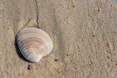 Le coquillage superficiel par les agents a lavé sur une plage sablonneuse image stock