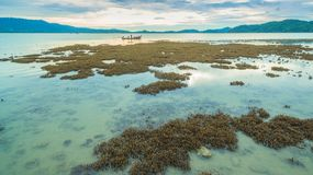 Le corail émerge de l'eau à un niveau d'eau réduit Photos stock