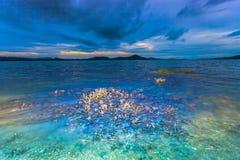 Le corail émerge de l'eau à un niveau d'eau réduit Images stock