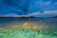 Le corail émerge de l'eau à un niveau d'eau réduit Photos libres de droits