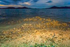Le corail émerge de l'eau à un niveau d'eau réduit Image libre de droits