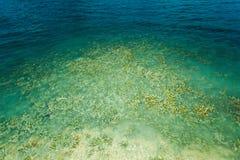 Le corail émerge de l'eau à un niveau d'eau réduit Photo libre de droits