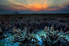 Le corail émergent de la mer pendant le lever de soleil Images stock