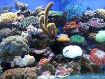 Le corail est aquarium d'eau de mer Images stock