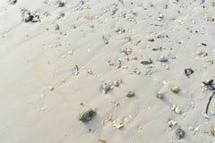 Le corail et les coquilles sont sur la plage avec le soleil image stock