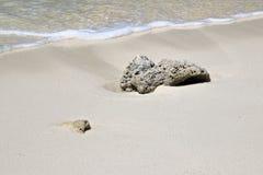 Le corail a trouvé sur la plage d'Ukulhas, Maldives Photo libre de droits