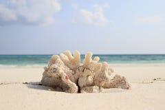 Le corail a trouvé sur la plage d'Ukulhas, Maldives Image libre de droits