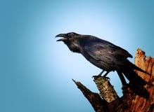 Le corbeau images stock