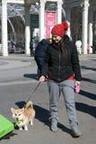 Le corgi poursuit à la célébration de jour du ` s de St Patrick à Moscou Image stock