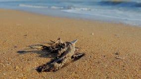 Le corps de mort d'un oiseau sauvage se situe dans le sable près de la mer banque de vidéos