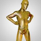 Le corps humain Image libre de droits