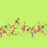 Le cosmos fleurit le fond vert Image libre de droits