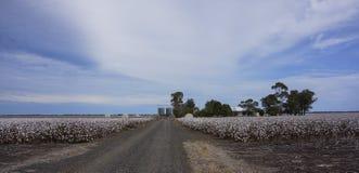 Le coton met en place prêt pour moissonner dans l'Australie Photos stock