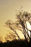 Le coucher de soleil brille sur les arbres et les oiseaux Images stock