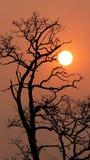 Le coucher de soleil et les arbres Photo libre de droits