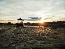 Le coucher du soleil image libre de droits