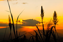 Le coucher du soleil Photographie stock libre de droits