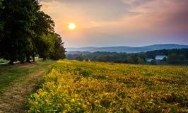 Le coucher du soleil au-dessus d'un champ de ferme et les collines de Piegon s'approchent du verger de ressort, Photo stock