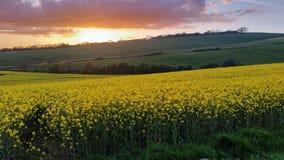 Le coucher du soleil au-dessus de la graine de colza met en place Modbury Devon R-U Images libres de droits
