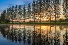 Le coucher du soleil d'été comme cygne barbote dans un étang Photos stock