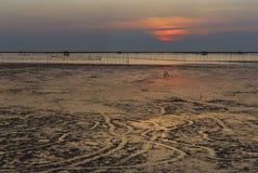 Le coucher du soleil d'Afeter au-dessus du bord de mer et le marécage avec la silhouette écossent f Photos libres de droits